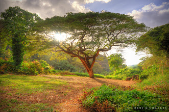 Photo: tree of life  +Charles Lu