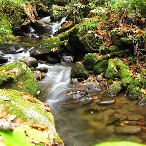 Small waterfalls by Evah Banova - Landscapes Waterscapes ( mountain, nature, fall, waterfall, moss, trees, long exposure, landscape, leaves, rocks,  )