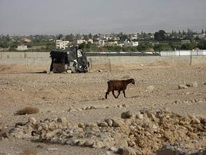 Photo: Looking east across the Jordan...מבט מזרחה אל מעבר הירדן