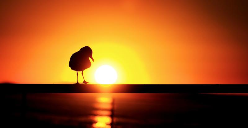 Photo: The Lone Seagul