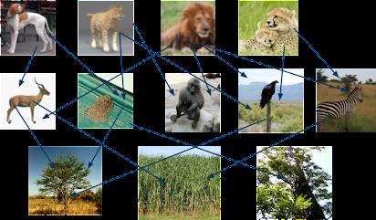 The Grassland Savanna Biome Kern Kelley