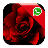 Roses for Whatsapp Wallpaper