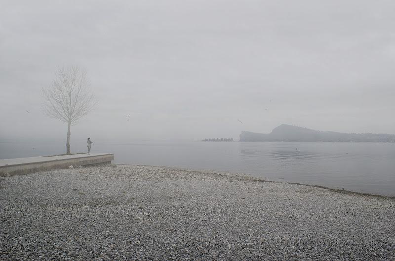 Nebbia e gabbiani di mariarosa-bc