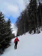 Photo: Die Forststráße ist zugeweht und dadurch recht mühsam zu begehen (Bänder und Gelenke tun bald ordentlich weh).