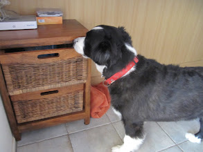 Photo: Year 2 Day 170 - I Know My Toy Is in Here