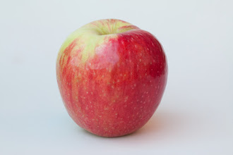 "Photo: 'Folwell' apple variety developed by the University of Minnesota, Agricultural Experiment Station.  Released in 1921.   Minnesota Agricultural Experiment Station project #21-016, ""Breeding and Genetics of Fruit Crops for Cold Climates."""