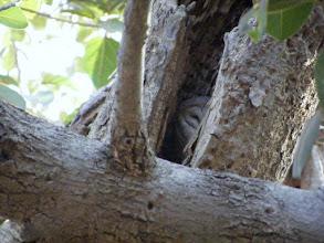 Photo: A sleepy owl