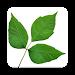 Poison Oak Detector APK