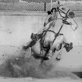 Barrel Racer 2 by Joe Saladino - Black & White Sports ( horse, barrel race, monochrome, competition, girl )