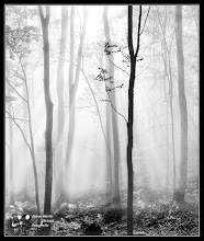 Photo: Trees in the fog- My contribution to:  #MinimalMonday Curator : +Olivier Du Tré #MistyMonday Curator : +Martin Rak #MonochromeMonday Curator : +Siddharth Pandit #MoodyMonday Curated : +Philip Daly #NatureMonday Curated: +Rolf Hicker +Kate Church #MysteryMonday Curated +Jenna Lynn Monroe #TreeTuesday Curated. +Christina Lawrie #art #fineart #CritiquePls #PlusPhotoExtract #FineArtPls