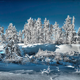 Northern Winter by Tom Gallant - Landscapes Forests ( winter northern winter, hoar frost winter, extreme cold, wilter landscape, landscape )