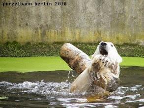 Photo: Hoch mit dem Stamm :-)