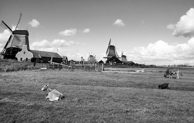 Il dolce pascolare nella quieta olandese  di Fabvan91