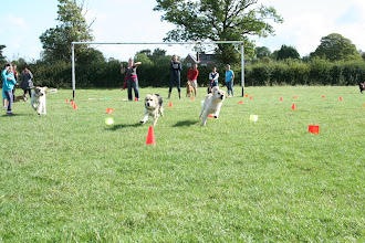 Photo: Fastest Recall race between Lotti Spinone, Gretl Golden X and Lola Golden. Don't you just love seeing their facial expressions as they are running?