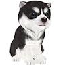 joon.pat_puppy