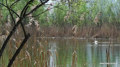 Photo: wir haben auch einen schwan im lido ;-)