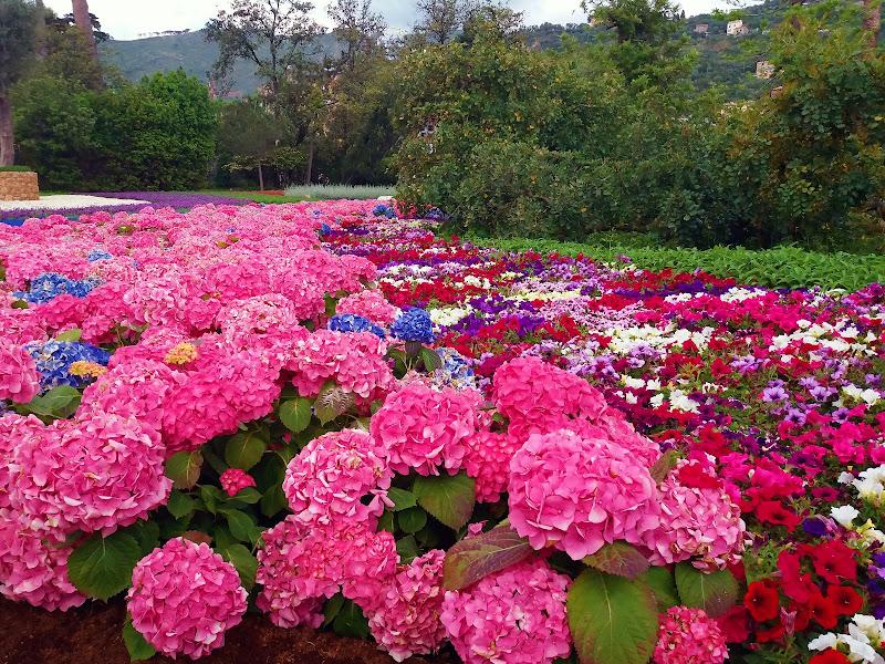 Tripudio di fiori  a Genova di Ingles Alberti