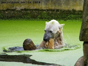 Photo: Simultan bespielt Knut Baumstamm und Kauknochenrest :-)
