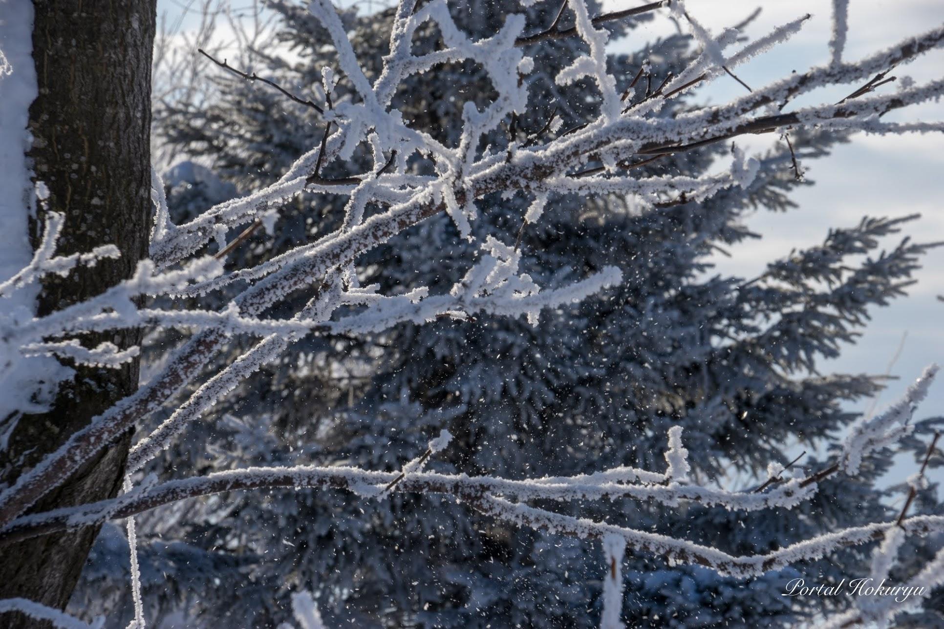 きらめく雪氷の粒