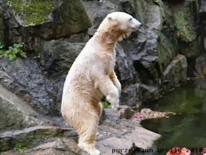 Photo: Knut wartet auf Nachschlag ;-)