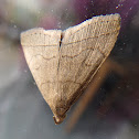 Litter moth