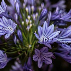 by Diogo Ferreira - Flowers Flower Gardens (  )