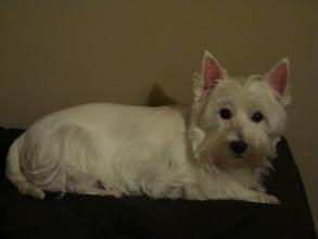 Photo: my cute dog, Duffy