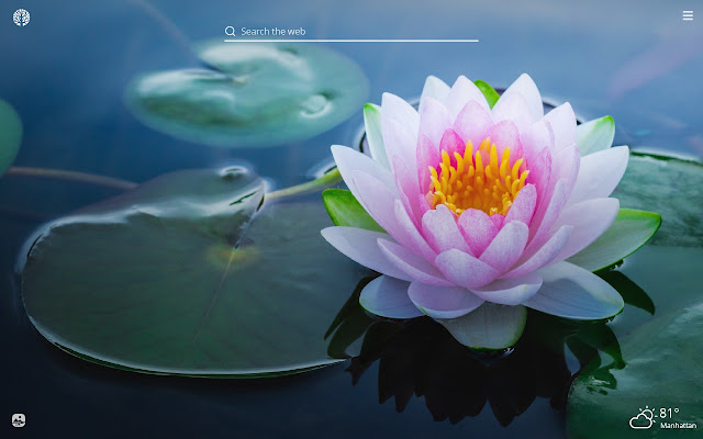 Lotus Flower Hd Wallpapers New Tab Theme