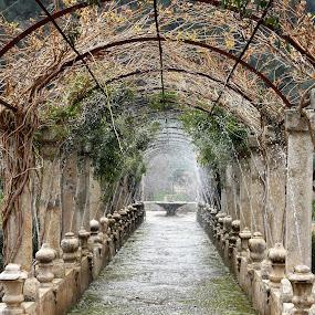 Al Fabia by Carola Mellentin - City,  Street & Park  Historic Districts ( historic district, symmetry, mallorca, garden, spain, al fabia,  )