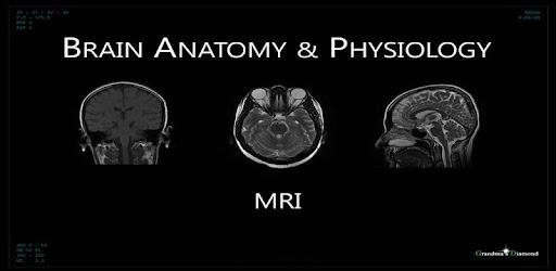 Interactive Brain Anatomy Mri Apps On Google Play
