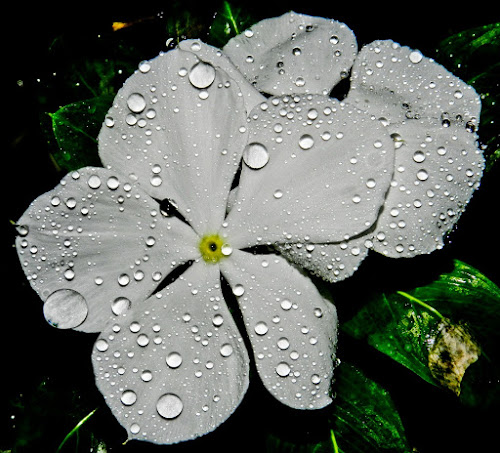 015 by Navin Khakha - Nature Up Close Flowers - 2011-2013