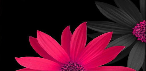 flowers and roses images gif k apl di google play