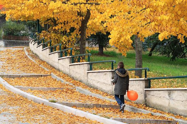le foglie in autunno di rino_savastano