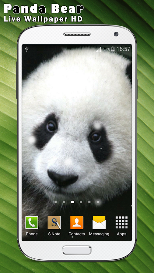 panda bear live wallpaper hd android apps on google play