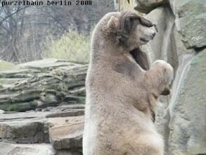 """Photo: Knut spielt """"Blinde Kuh"""" mit dem Jutesack :-)"""