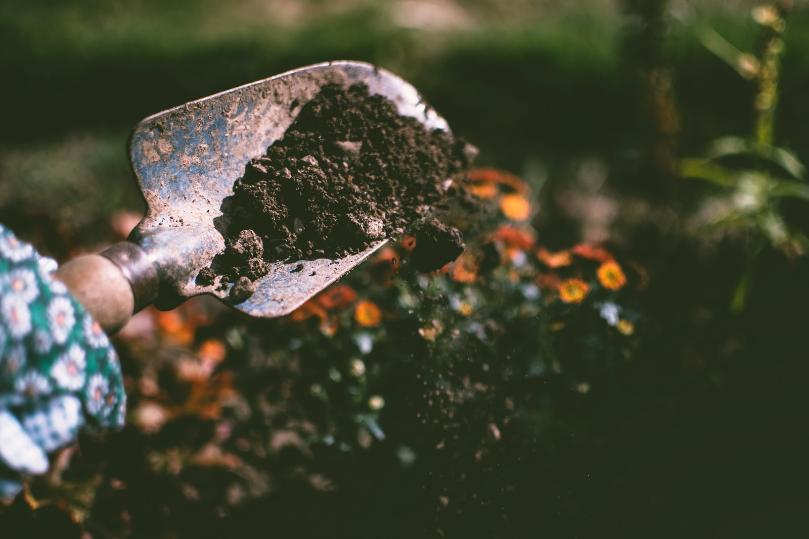 A garden trowel filled with dark soil is spilling some to the ground. Flowers can be seen in the background.