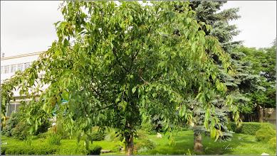 Photo: 2016.06.016 - zona Postei - fara fructe