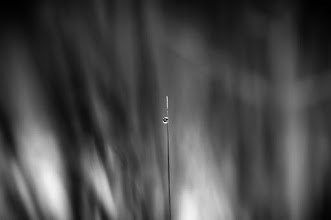 Photo: a drop in the ocean...  goodnight friends :)  #bwphotography  #monochrome  #monochromeartyclub  #blackandwhitephotography  #droplets  #droplettuesday  #dropletspoker   I've posted this before, but deleted the original so re-posting :))