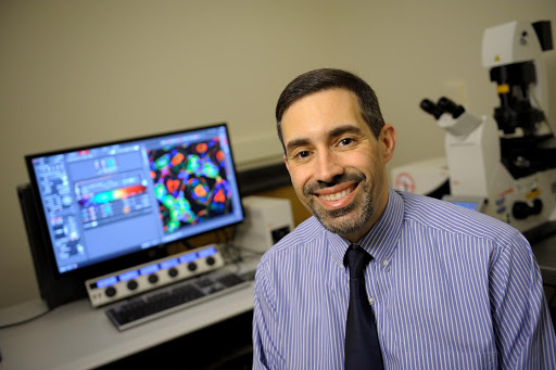 Beckman neuroscientists uncover neuronal circuitry controlling auditory sensory perception