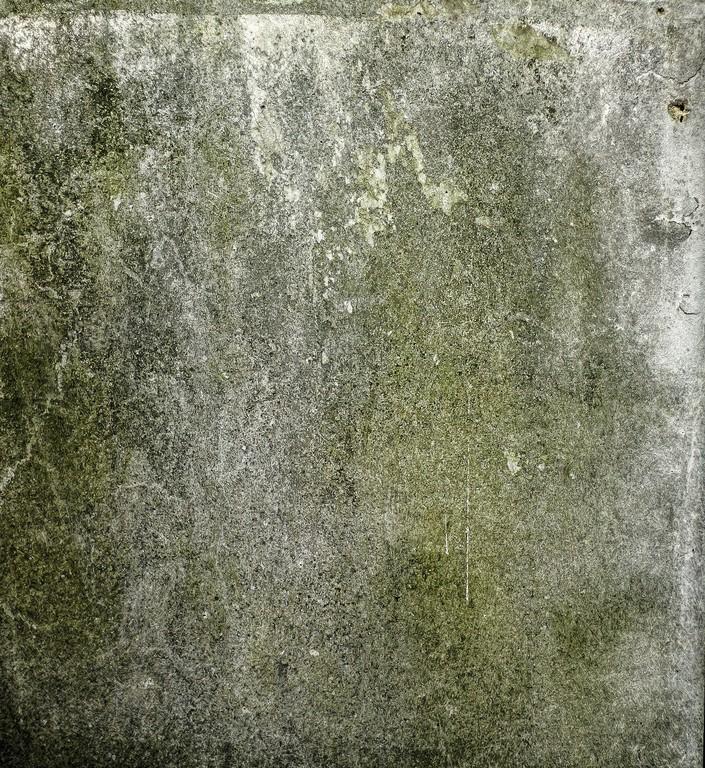 Pleśń na ścianie