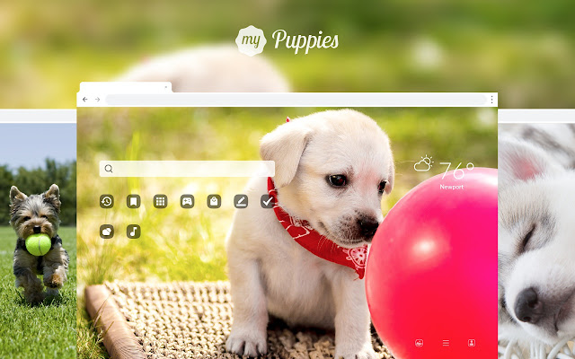 My Puppies – Adorable Puppy & Dog Wallpapers