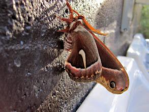 Photo: gorgeous moth!