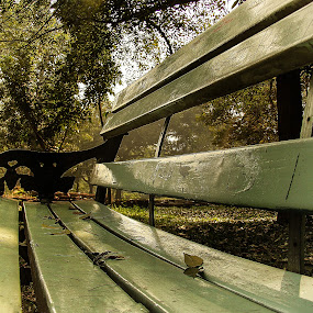 The Bench by Sayan Basu - City,  Street & Park  City Parks ( bench, park, leaf )