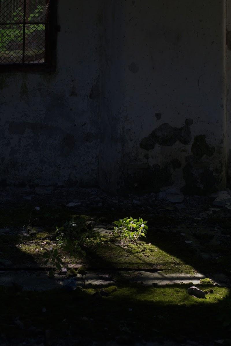 La voglia di vivere nonostante l'abbandono di -Os-