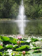 Photo: Yoga Farm, Grass Valley, CA - Pond & Fountain