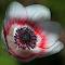 IMG_9887_PIX_1140_E.JPG