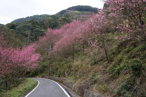 台北景點推薦-三峽櫻花秘境【熊空山觀天下農場】
