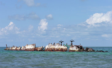 Photo: Cormorants on an old wreck