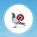 Pigeon Market icon