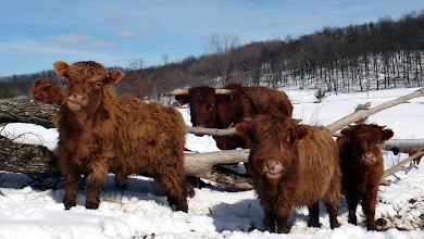 Photo: Some of the gang enjoying a snow covered sunshiney day!